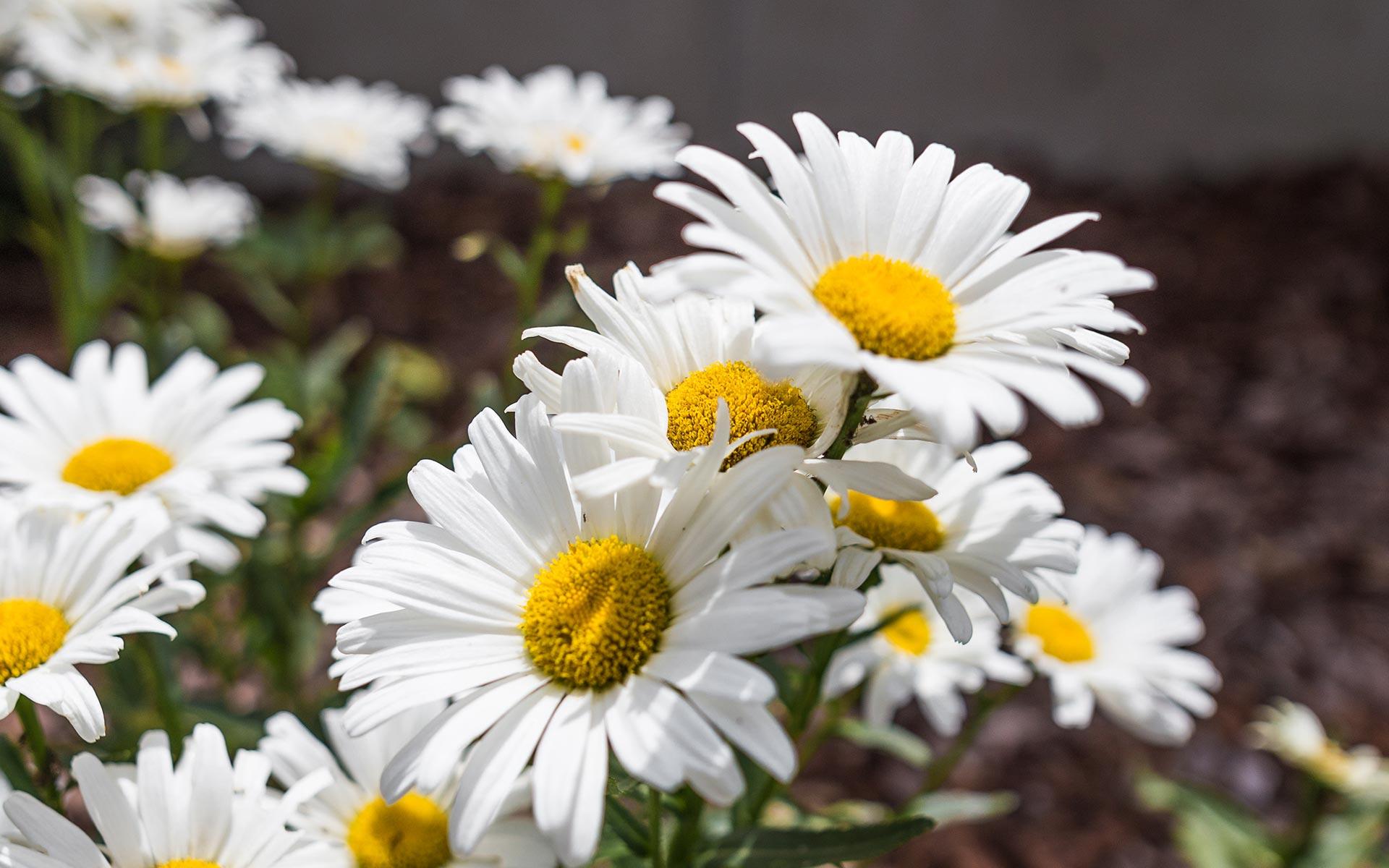 Blumen Kröll