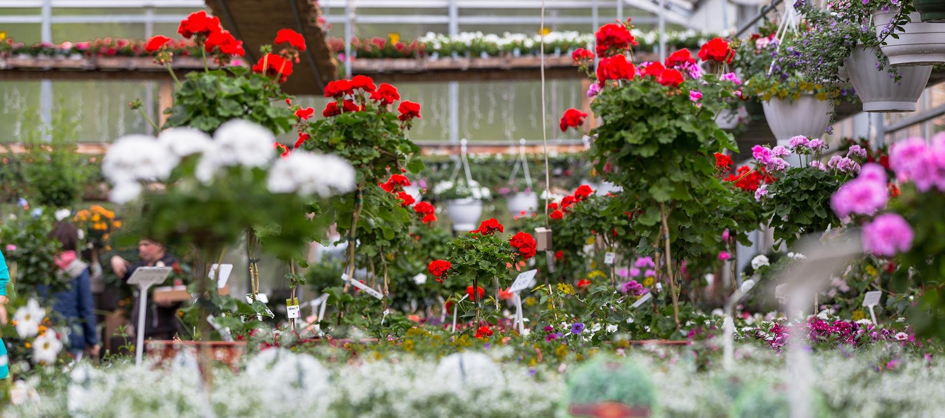 Gartenhaus Tirol